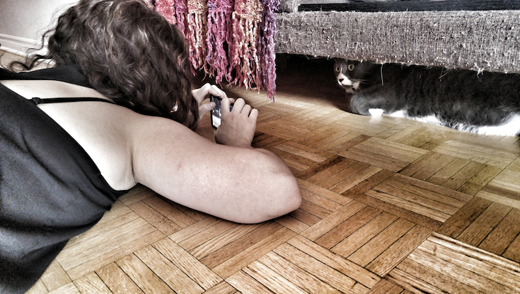 Cat being photographed