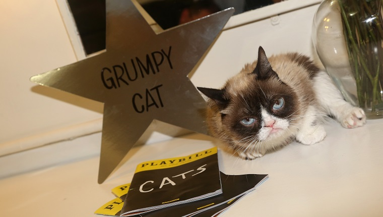 "NEW YORK, NY - SEPTEMBER 30: (EXCLUSIVE COVERAGE) Grumpy Cat relaxes in her dressing room as she makes her broadway debut in ""Cats"" on Broadway at The Neil Simon Theatre on September 30, 2016 in New York City."