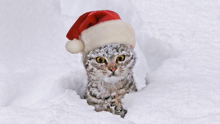 Funny kitten in Santa hat
