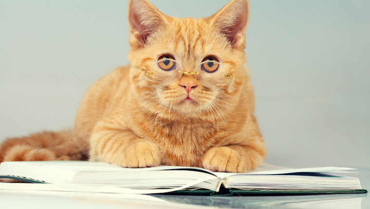 Cat with planner