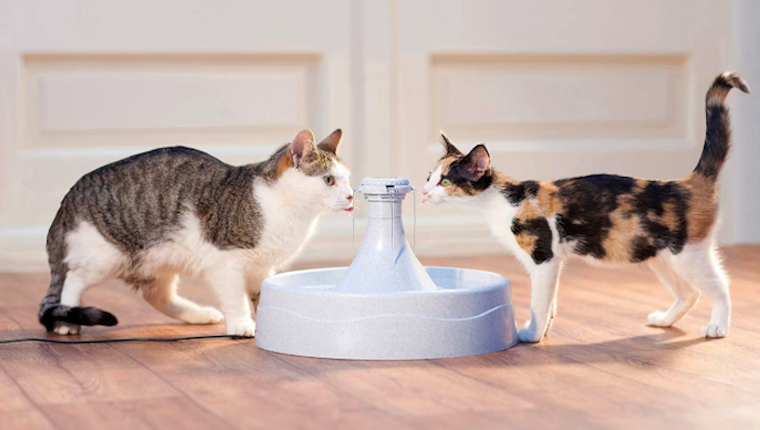 Cats at water fountain