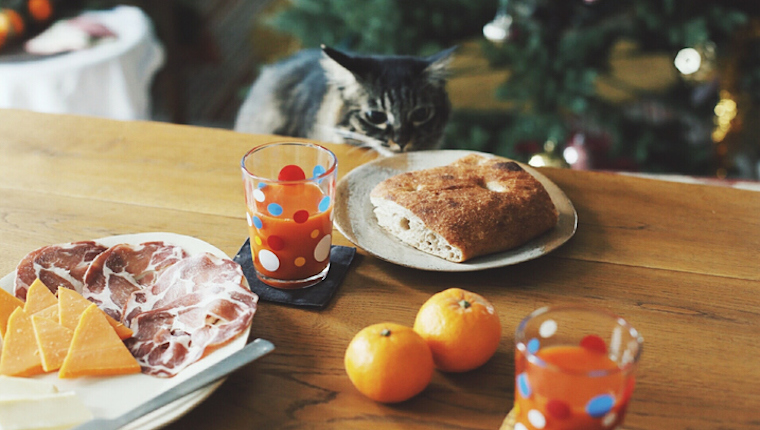 Cat looking at bread on table