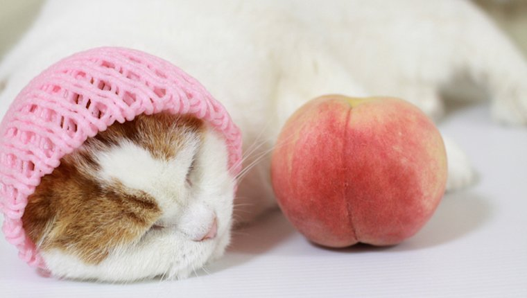 Cat and peach