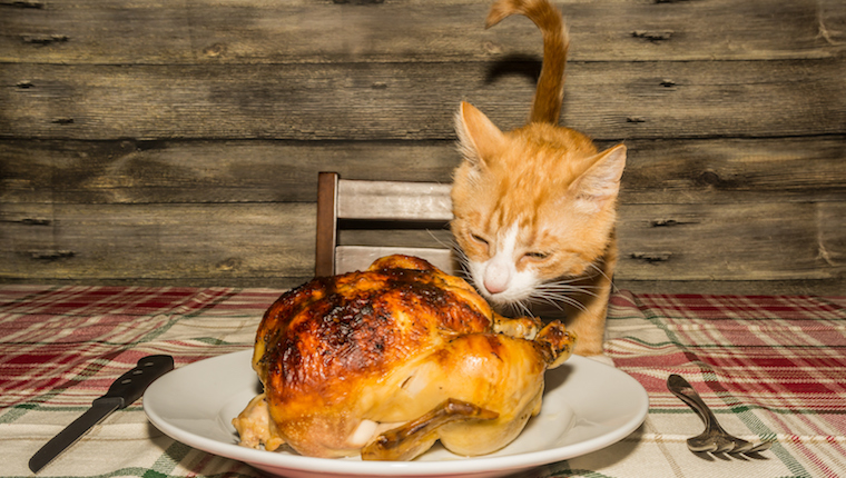 Cat eating roast turkey