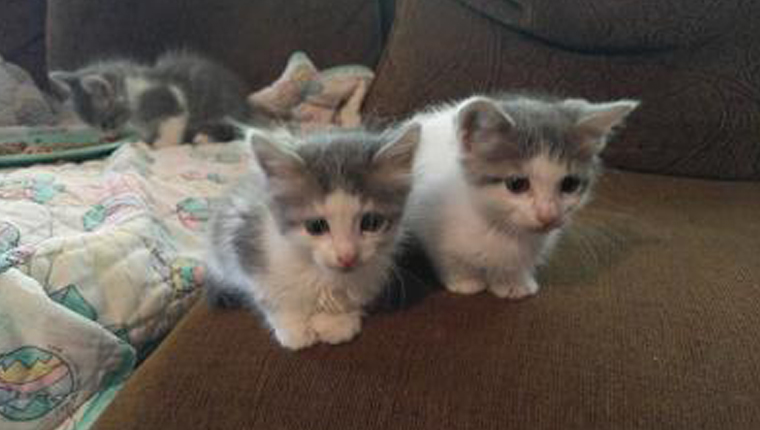 three kittens on a couch