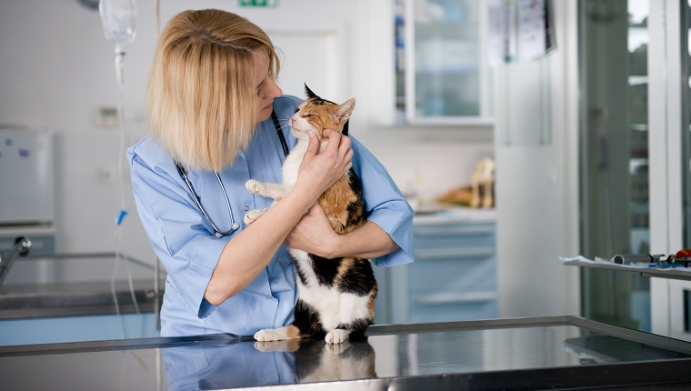 Young veterinarian doctor with healthy cat.