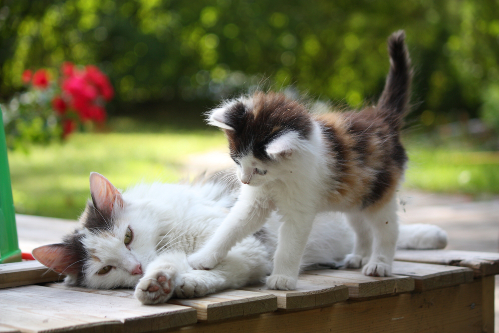 15 Pictures Of Mama Cats And Kittens For Mothers Day Cattime