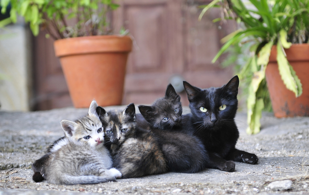 15 Pictures Of Mama Cats And Kittens For Mothers Day