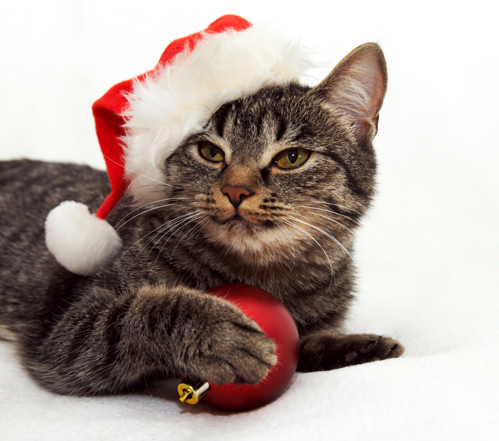 20 Cats Posing For Their Christmas Cards [PICTURES] - CatTime