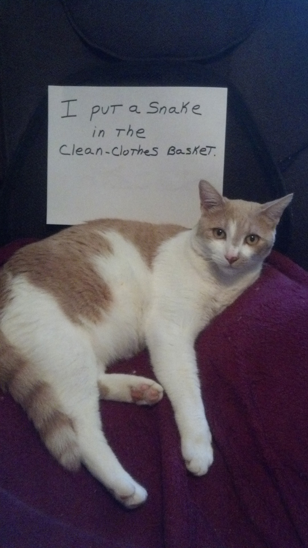 Funniest Cat Shaming Pictures