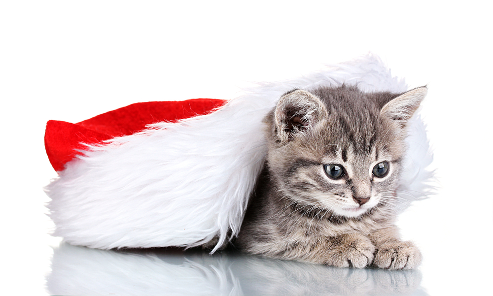 20 Christmas Kittens Who Are Ready For Santa [PICTURES] - CatTime