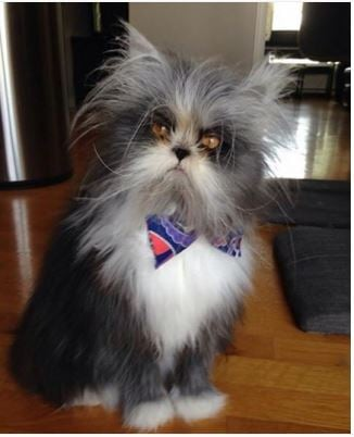 22 of the creepiest cats on earth halloween edition  cattime