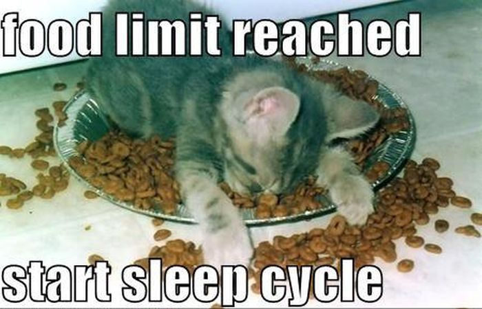 Funny No Sleep Meme : 25 funny cat memes that will make you lol