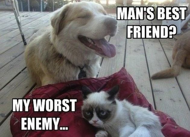 Funny Cat Memes Clean : 25 funny cat memes that will make you lol