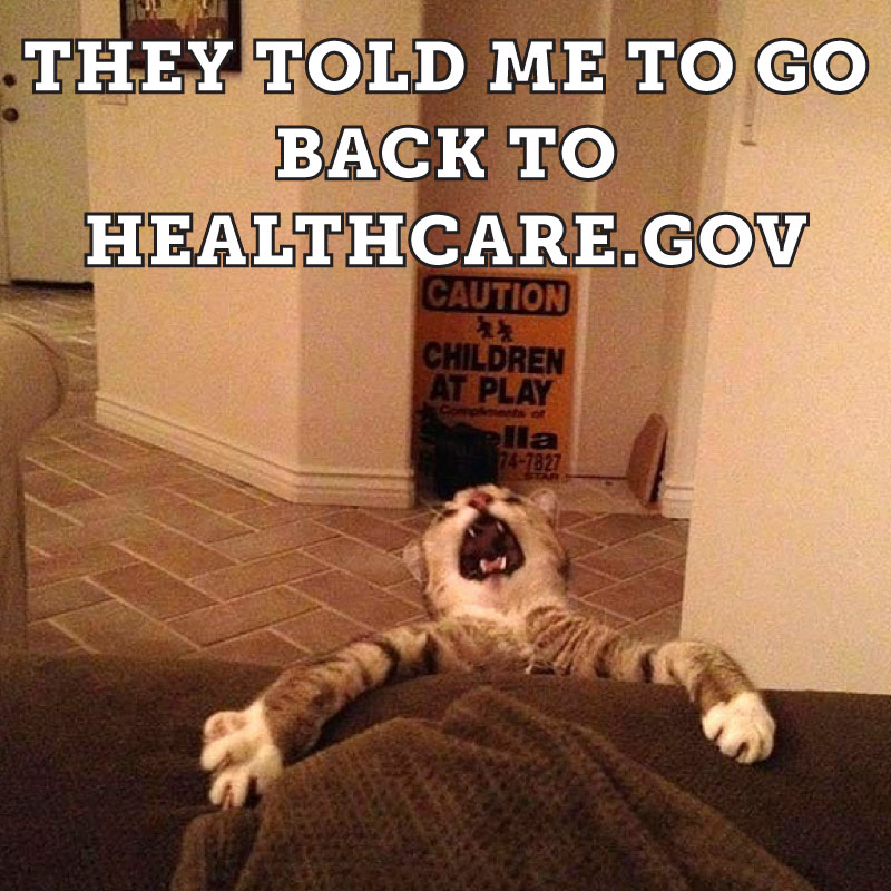 funny obamacare cat memes 25 funny cat memes that will make you lol