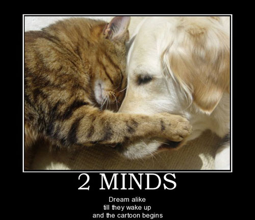 Cats And Dogs Phrases