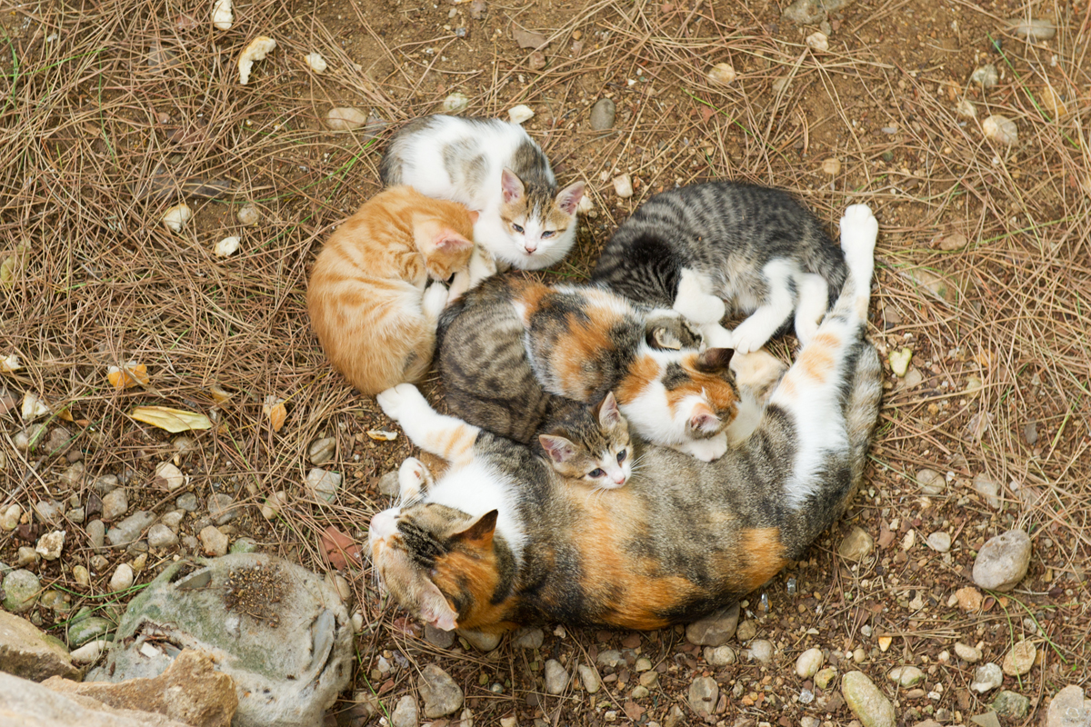 For Mother s Day 25 Mama Cats And Their Kittens CatTime