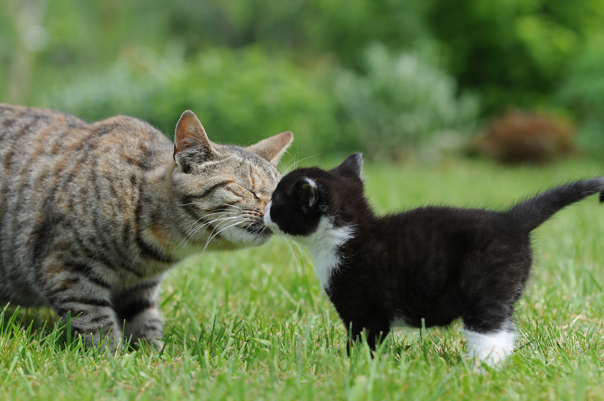 For Mothers Day 25 Pictures Of Mama Cats And Their Kittens