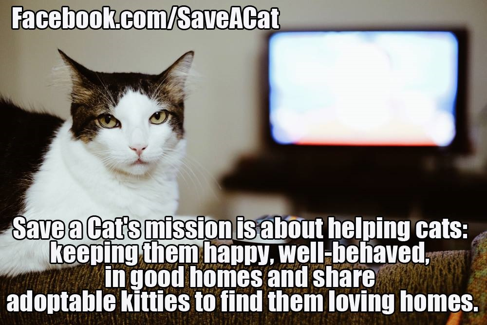 Save A Cat's Mission