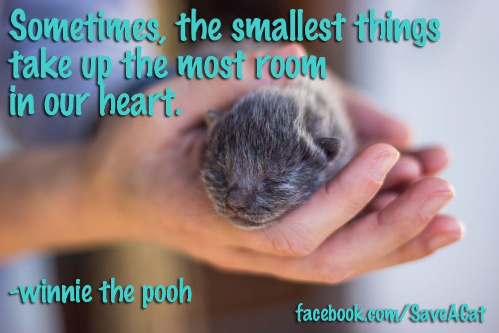 The Smallest Things