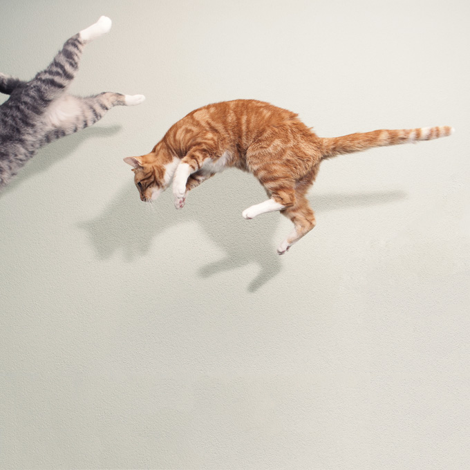 Amazing Cat: 22 Amazing Photographs Of Cats In Flight [Picture Gallery