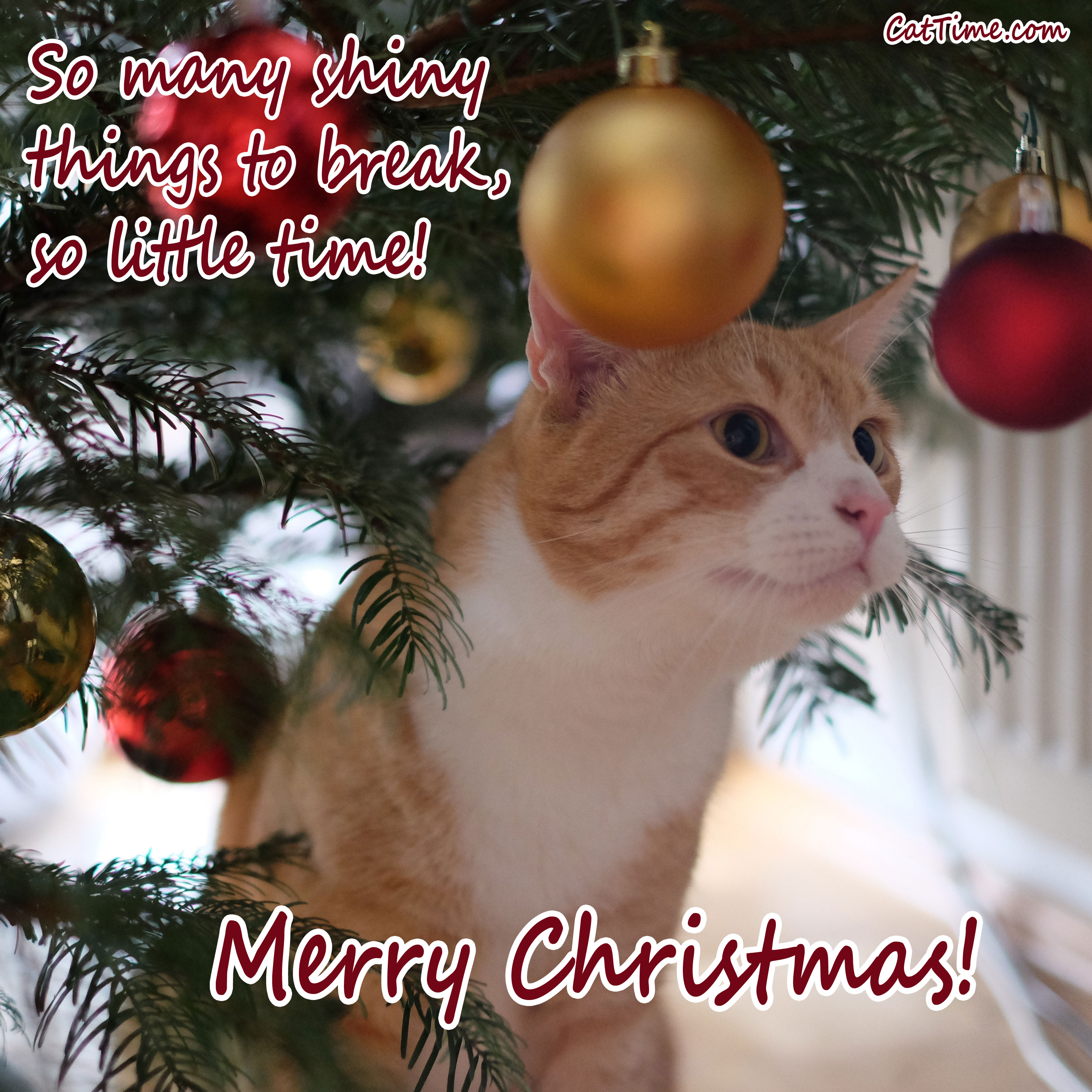 15 cat christmas cards you can share with your friends and family so many shiny things m4hsunfo