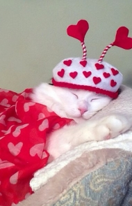 Valentines Need Their Beauty Sleep