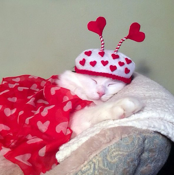 For Valentine S Day Cat Toys : Cats who want to be your valentine for s day