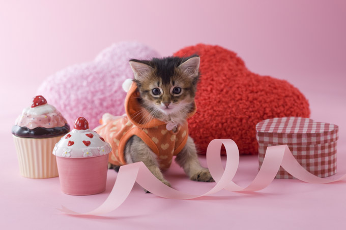 cats who want to be your valentine for valentines day - Cat Valentines Day