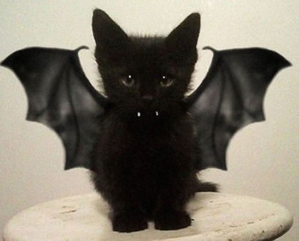 17 Black Cats Who Are Ready For Halloween
