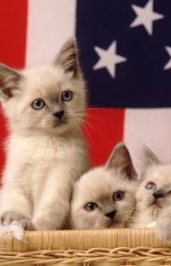 A Basket Of Future President Cats