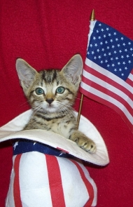 Uncle Sam Keeps A Kitty In His Hat For Luck